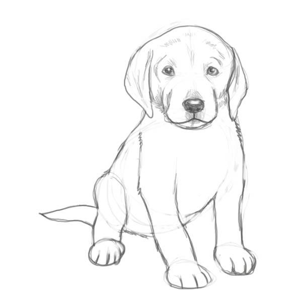 Kako Nacrtati Psa Korak Po Korak Uputstvo Kako Se Crta Kuca Sa